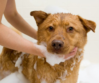 Simple Tricks To Make Dog Bathing Easier Faster And Neater - 24 animals that really arent happy about it being bath time