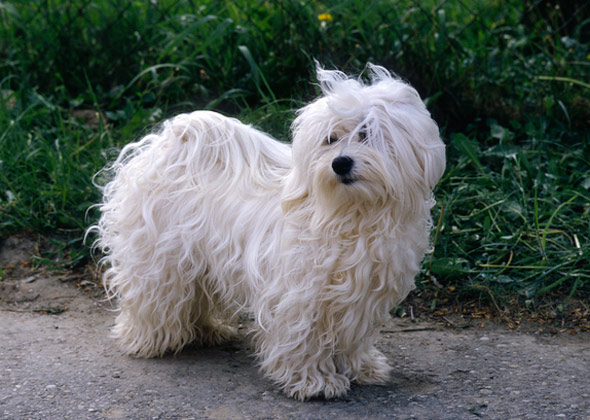 Best Small Dog Breeds For First Time Owners