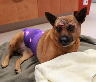 Dog recovering after being thrown from car