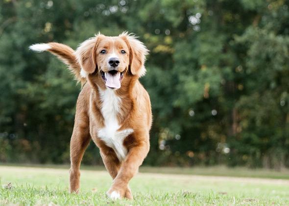 downward dog least trendy male and female dog names of