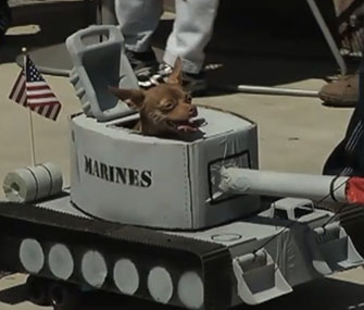 Chihuahua driving a tank