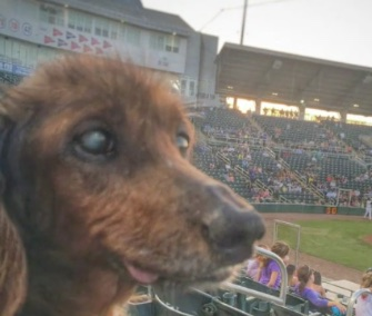 Morgan, a Dachshund rescued at age 18, has been enjoying lots of little adventures.