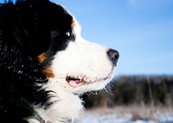 10 Best Cold-Weather Dog Breeds — Photo Gallery