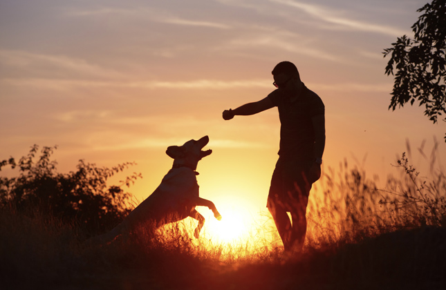 Dog and Person Summer Silhouette