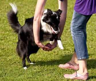 Teaching Dog a Trick