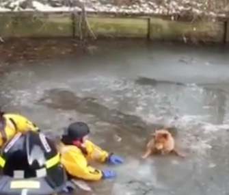 Firefighters in Virginia rescued a panicked Chow who'd fallen into an icy lake.