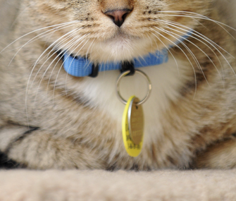 Cat wearing collar