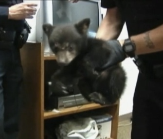 An orphaned bear cub spent a night with police in Myrtle Creek, Oregon.