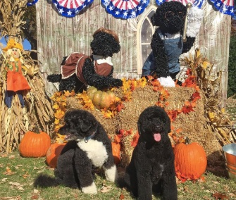 Bo and Sunny Obama greeted trick-or-treaters on the White House lawn Saturday.