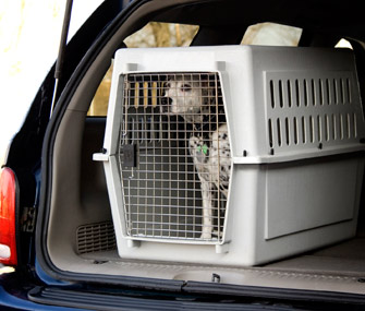 Dog crated in car