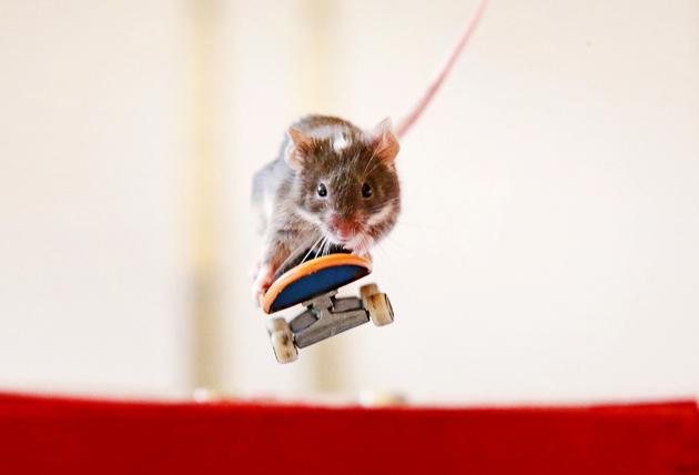 Mice ride skateboards