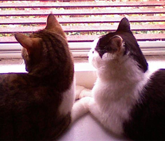 two cats look out the window