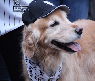 The Chicago White Sox broke a Guinness World Record for the number of dogs in attendance at a game.