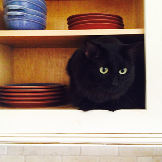 black cat hiding in cupboard