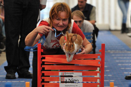 European rabbit hopping championship