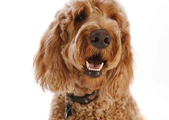 The 20 Hottest Dog Breeds And Mixes