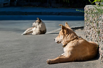 Homeless dogs lying down
