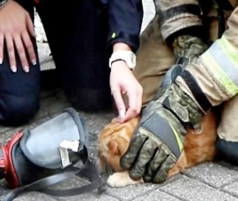 Firefighters revived Sammy the orange tabby after finding him in a burning apartment.