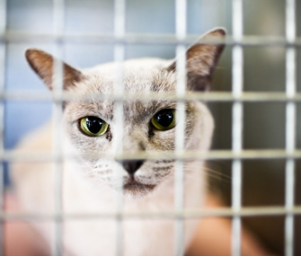 Shelter cat in a cage