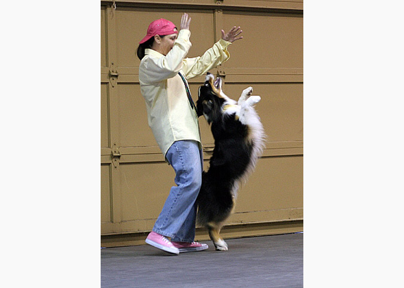Dancing With the Dog Stars — Trophy-Worthy Fancy Canine