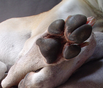 Why Do Dogs Bite Their Front Paws