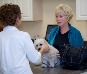 Vet and client discuss pet's health care