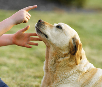 Dog Nipping Fingers