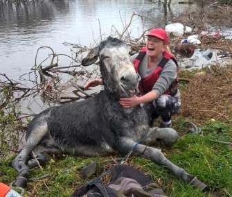 Mike the donkey was rescued from dangerous floodwaters in Ireland.