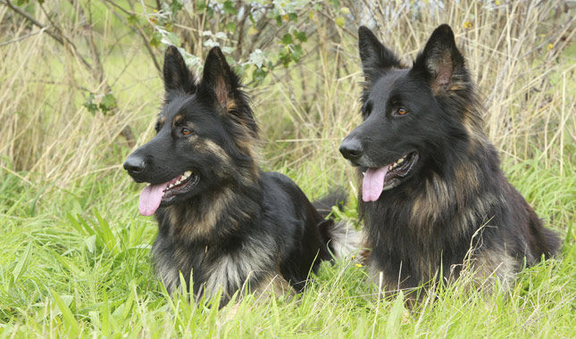 Big Dog Names Female German Shepherd