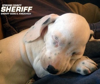 Spokane Valley, Wash., sheriff's deputy Marc Melville rescued this puppy from a roadside.