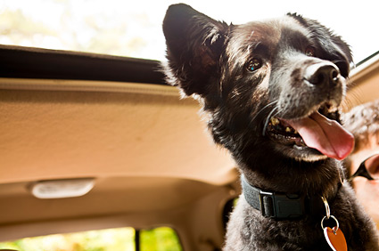Dog riding in the seat of a car.