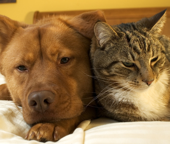 Keep Your Cat and Dog Together and Happy With Careful Planning