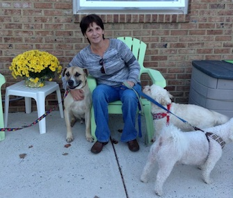 Butchie, left, was rescued by Kim Shaneybrook. He joins her two other dogs at home.
