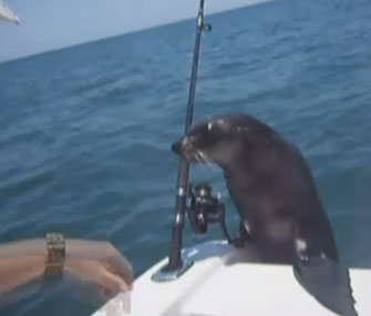 This young fur seal surprised an Australian family on their boat.