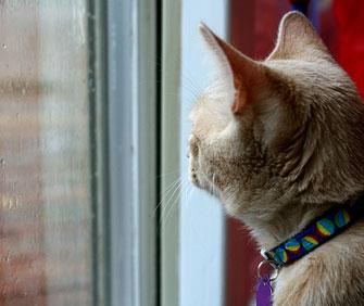 cat looking at rain