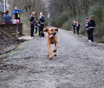 This happy hound crashed a half marathon in Alabama and came in 7th place.