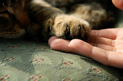 cat's paw in human hand