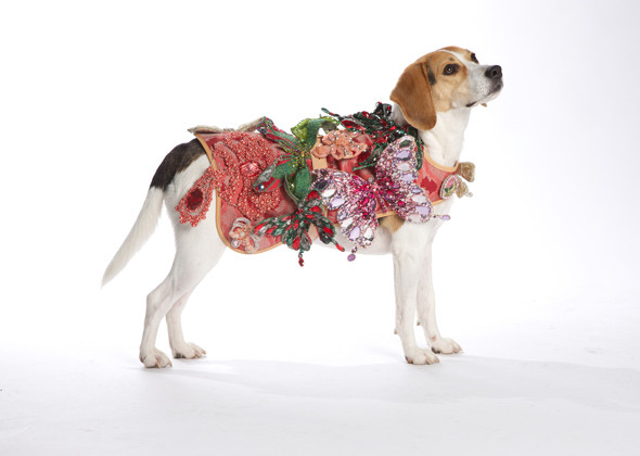 Shelter Dogs Work the Runway in Canine Couture