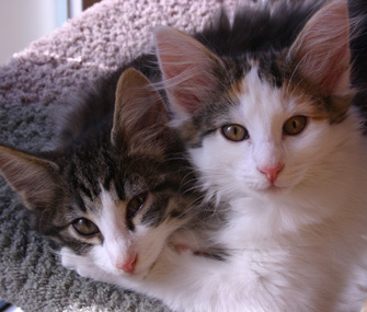 Pair of Kittens