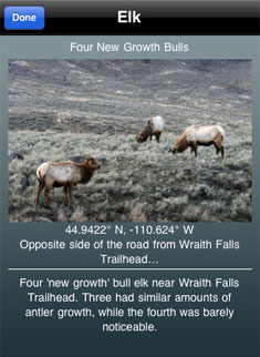 YNP Wildlife Screen Grab