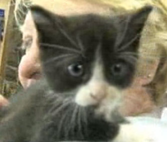A kitten rescued from a North Dakota storm drain has been named Drano.