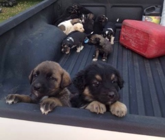 A hunter who found 20 abandoned puppies in Saskatchewan, Canada, brought them to a local shelter.