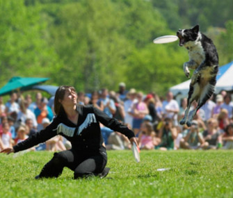 Dog competes in Disc competition