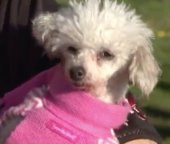Gigi was reunited with her owner nine years after she disappeared in a burglary.