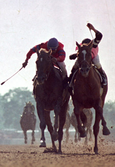 Affirmed and Alydar