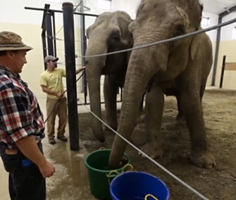 Circus elephants Opal and Rosie are spending their retirement at a rehabilitation facility in Maine.