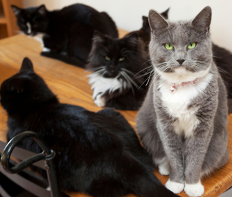 Lots of cats in a home