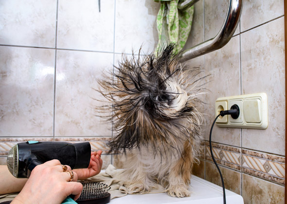 7 Most Common Dog Grooming Questions