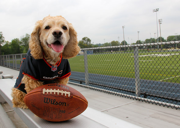 new style 2e8b8 0a40d 17 Dogs and Cats Who Are Ready for NFL Football