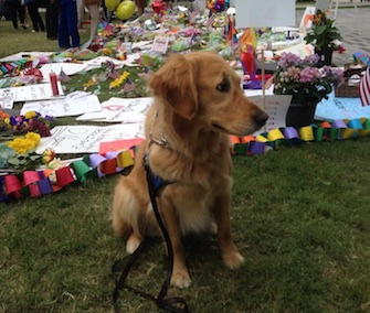 Ruthie, a K9 Comfort Dog, has been named the ASPCA's Dog of the Year for 2016.